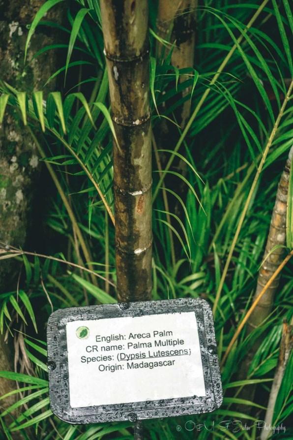 Costa Rica Costa Verde-1711