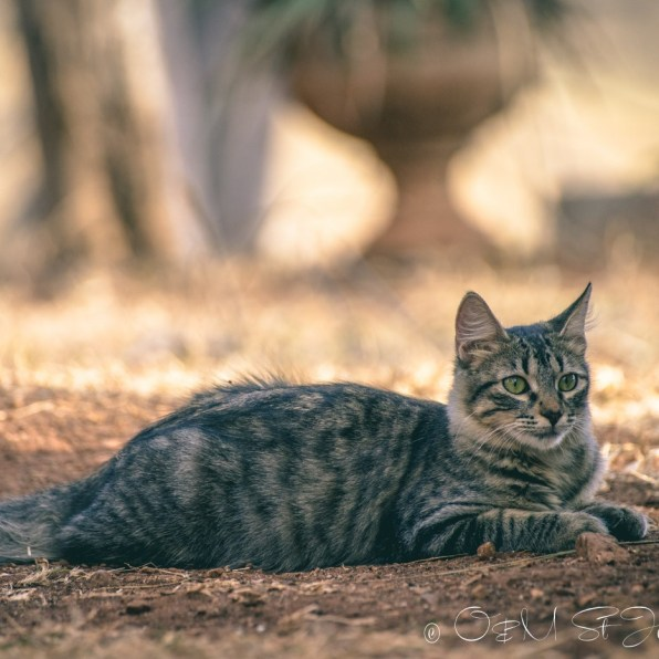 Our kitty Mia. Costa Rica