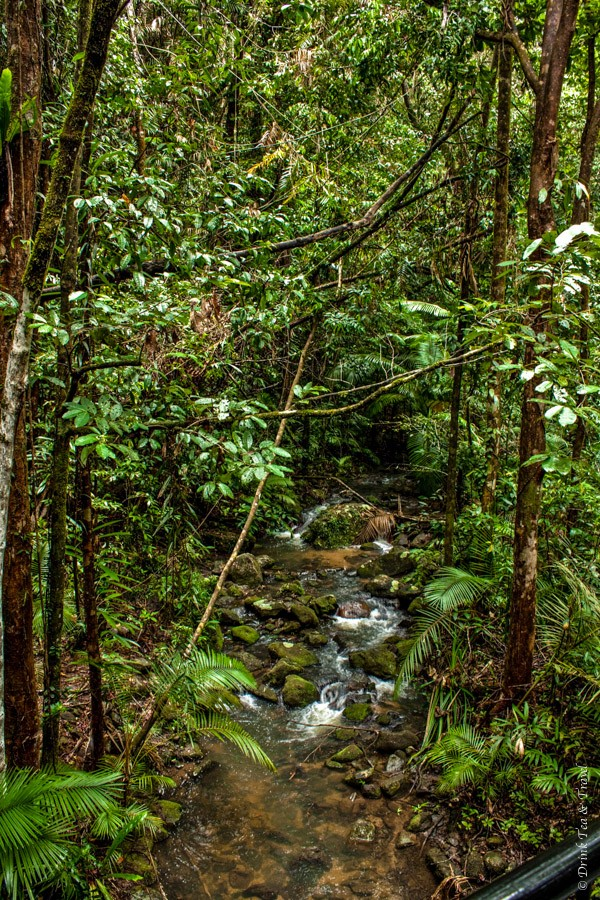 Deep in the rainforest inside the Daintree National Park