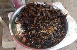 Fried Beetles Moths. Food in Cambodia