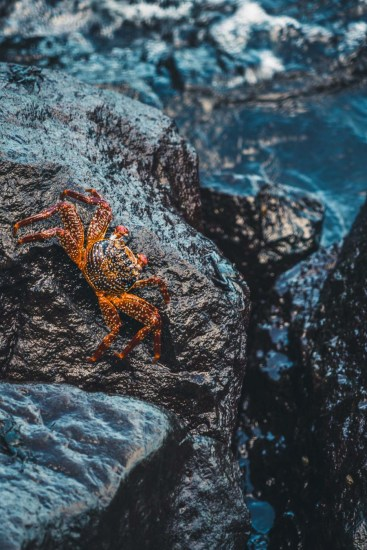Galapagos San Cristobal-2158