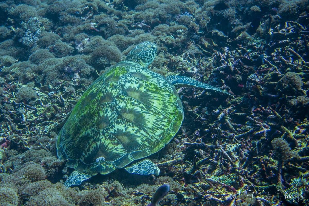 Indonesia Komodo-4833