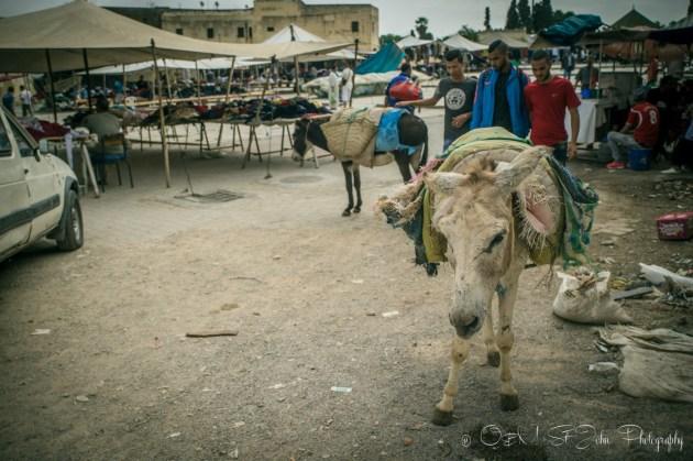 Morocco Fes-0886