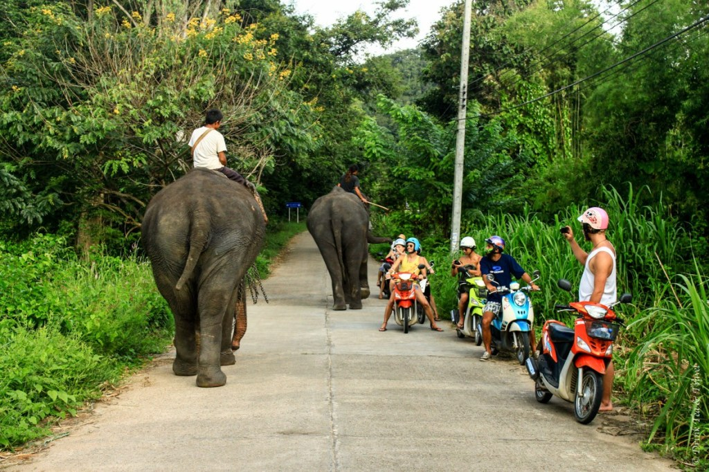 An amazing encounter with elephants in the middle of Pai countryside