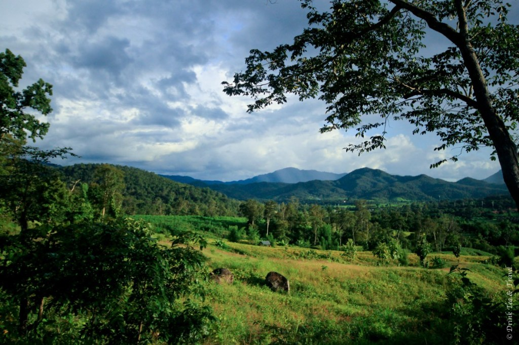 Lush greenery views in Pai
