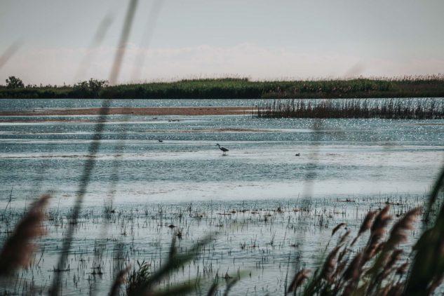 Spain Catalonia Ebro Delta Natural Park-08971