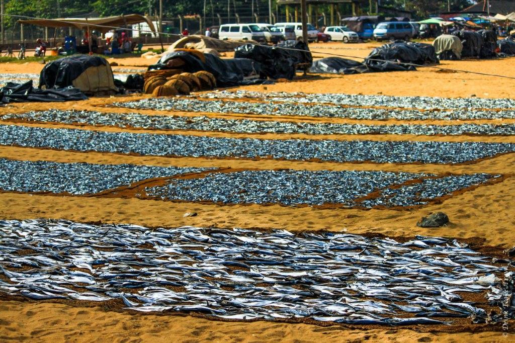 Dried fish in Negombo, Sri Lanka
