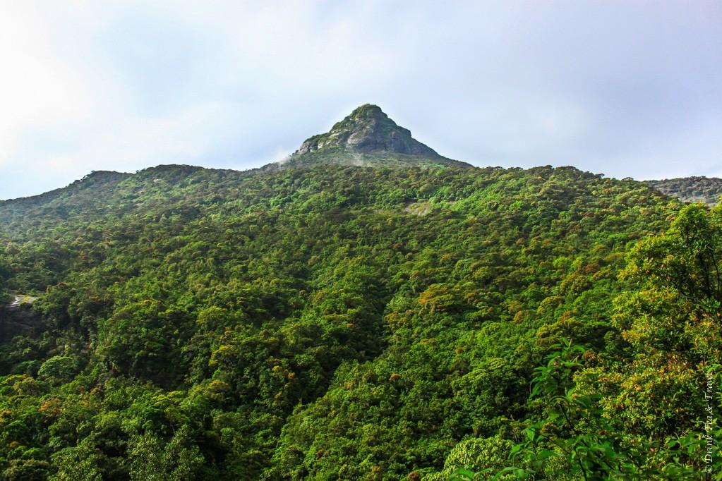 405dc9ce725e91 The Ultimate Guide to Climbing Adam s Peak