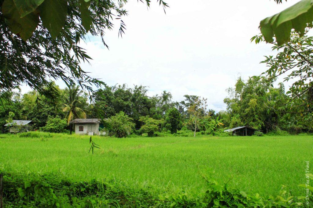 Farm land at the Thai Farm Cooking School, Chiang Mai, Thailand