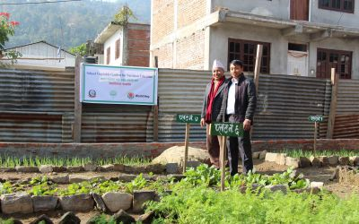 Reinforcing school gardens with home gardens in Nepal to improve family food choices
