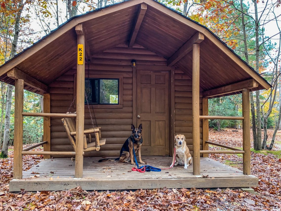 Traveling in a RV with Dogs