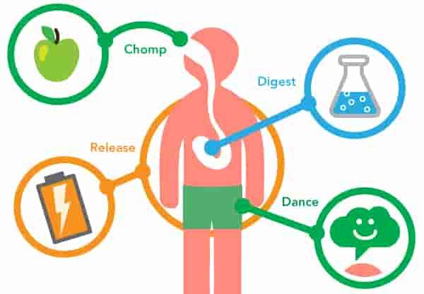 Metabolism : Definition, Process, & Biology