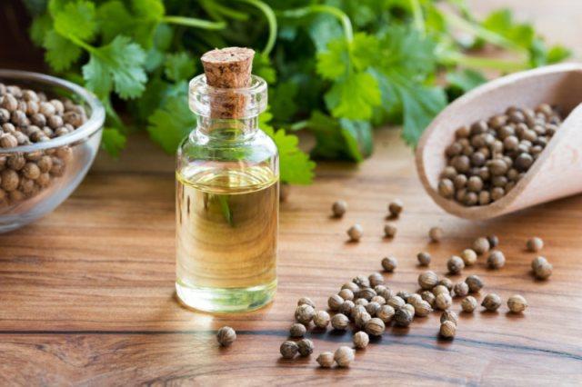 Benefits of Coriander Oil