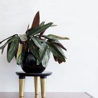Diy soporte para plantas