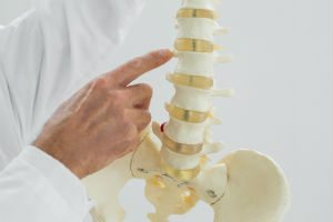 spinemodel - back neck joint pain