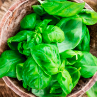 Basil-Essential-Oil-Uses-and-Benefitsh