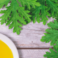 Citronella-Essential-Oil-Uses-and-Benefits-f