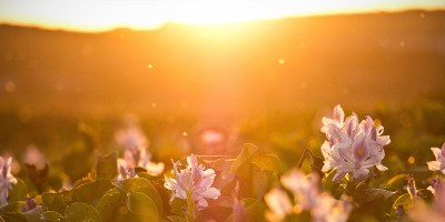 Vitamin D Q&A: What You Need to Know About Vitamin D Supplements