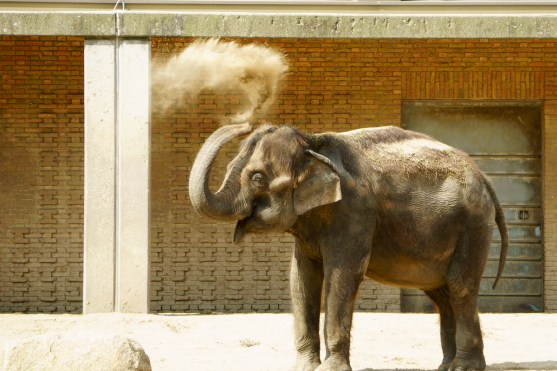 Berlin, Zoo, Elefant