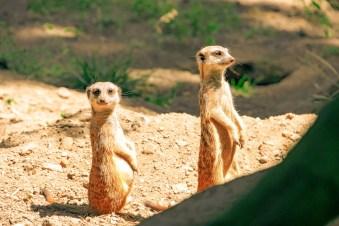 Burger´s Zoo Arnheim