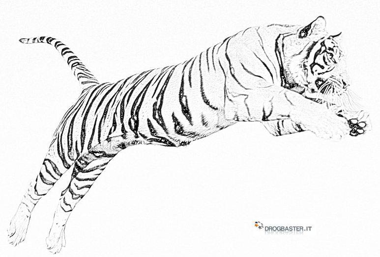 Tigre disegni per bambini da colorare for Immagini tigre da colorare