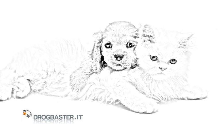 Cani disegni da stampare e colorare for Cani da colorare e da stampare