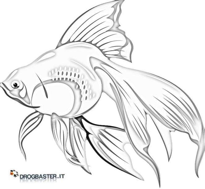 Pesci disegni da stampare e colorare for Disegni di pesci da colorare e stampare