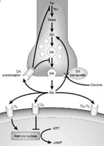 neuro enhancement