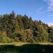 HTC M8 pics - 2