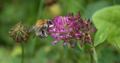 """<sectitle>Volksbegehren """"Artenvielfalt – Rettet die Bienen"""" </sectitle><br>Chance oder Risiko für Landwirte?"""