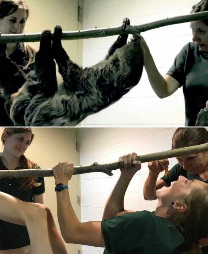16 Funny Pictures of Zookeepers as Animals Will Make Your Day -02