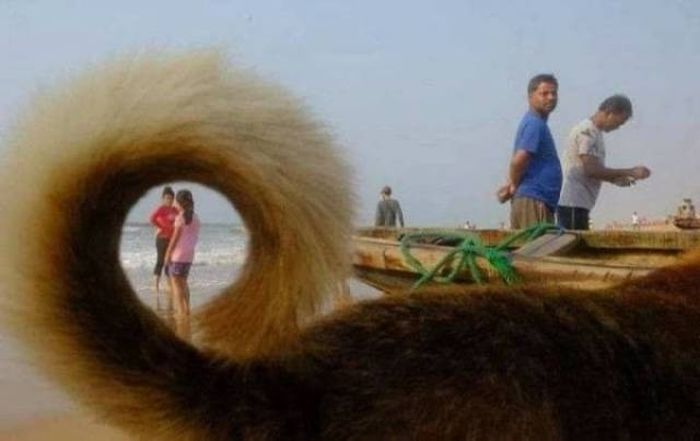 50 Perfectly Timed Photos That Will Blow Your Mind Seriously -04