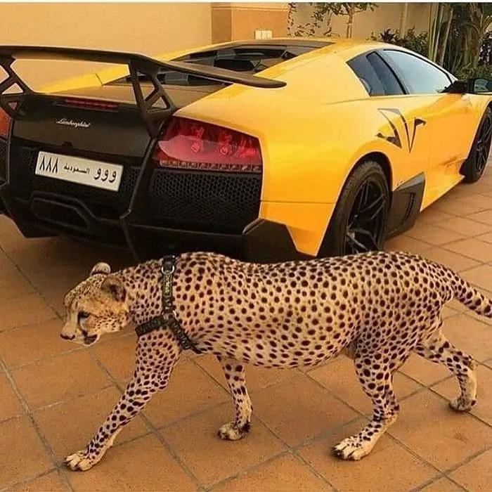 37 Pics of Rich Kids of Saudi Arabia That Will Amaze You -28