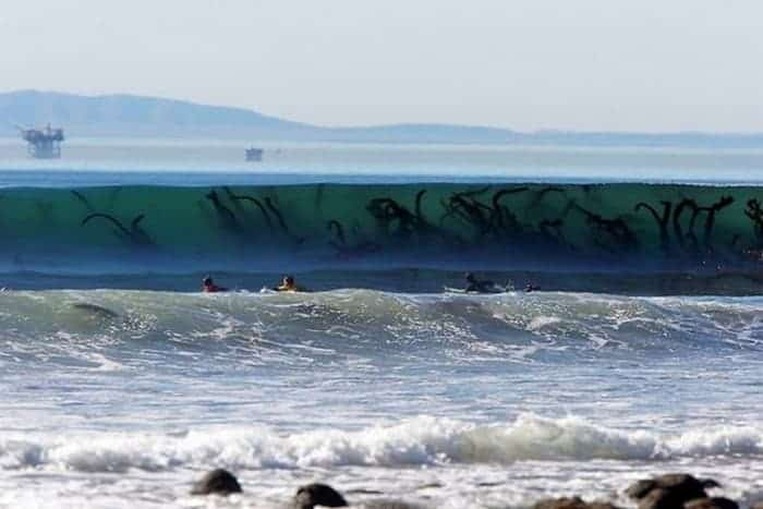 29 Pics That Prove Nature Is Scary AF -07