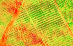 ndre-e1517523894535 Mappe multispettrali