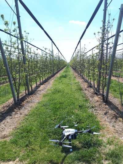 drone-frutteto-400x533 Illuminati Frutta