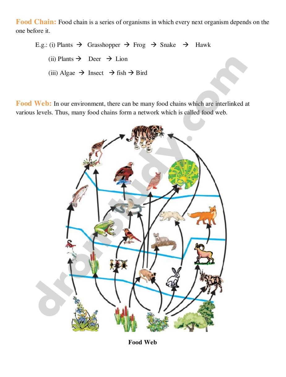 Chapter Notes: Our Environment - Class 10 Science