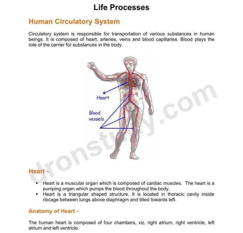 Chapter Notes: Life Processes - 2 (Class 10 Science
