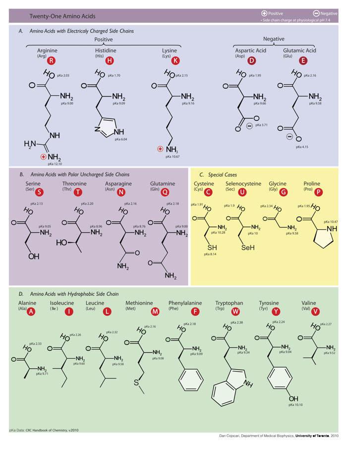 Figura 1: Todos los aminoácidos