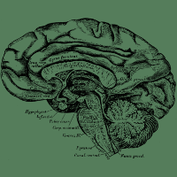 Brain Anatomy Design