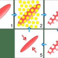 傷跡の治療 フラクショナルレーザー等の照射の際に起こる変化
