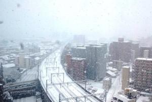 雪の日です。