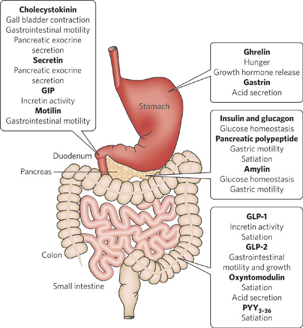 Lower Gi Anatomy Physiology