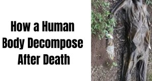 How A human Body Decompose After Death