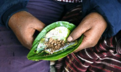 Slices of the Areca nut mixed with slaked lime and spices are placed in Betel leaves to create a betel quid