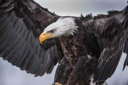 Spirituelles Krafttier Adler