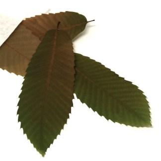 Kastanienblätter mit besonderer Energie