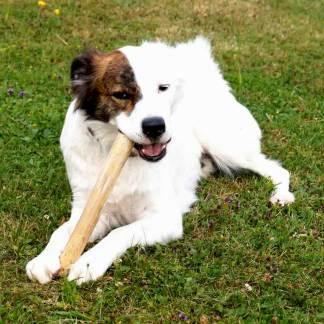 Hunde-Kaustab beruhigend