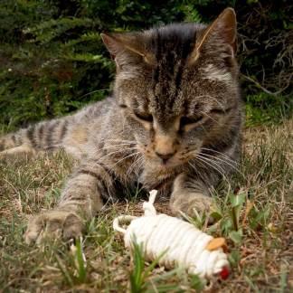 Energetisches Katzenspielzeug