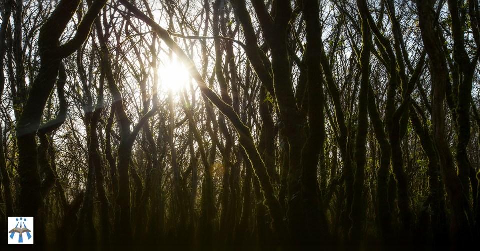 forêt-soleil-druidisme-solstice-equinoxe